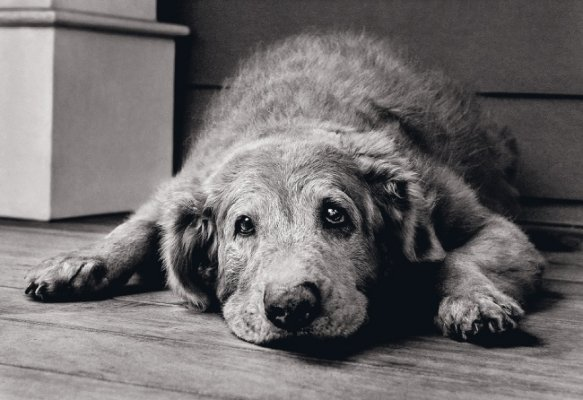 Do Old Dogs Get Kidney Disease