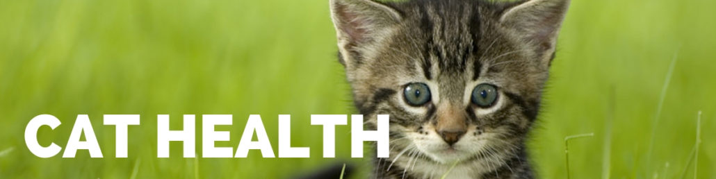 The Happy Beast - Blog - Cat Health