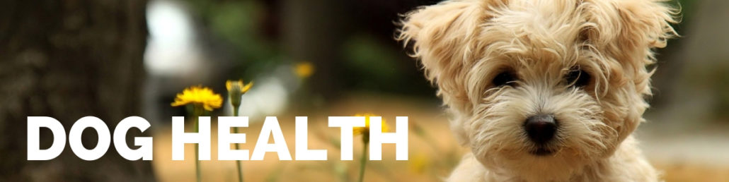 The Happy Beast - Blog - Dog Health